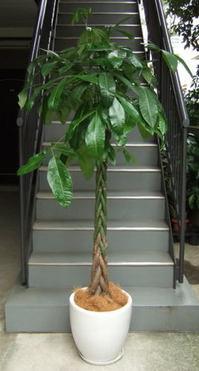 観葉植物.jpgのサムネール画像