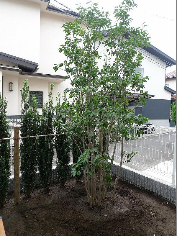 常緑樹001