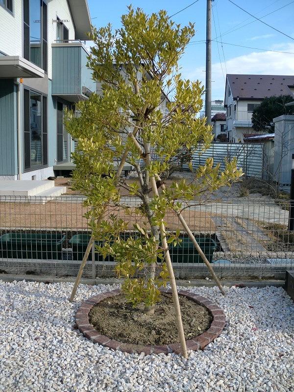 常緑樹003